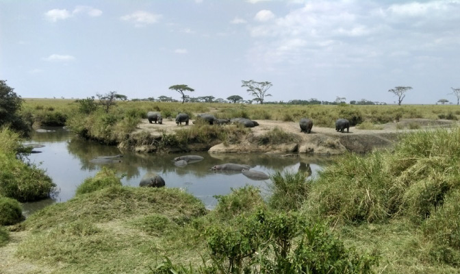 What to expect when volunteering in Kenya - taking a safari